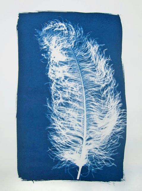 Feder, cyanoprint, handprinted on Archers Palatine paper, 76.5 x 56.5 cm, edition of 25