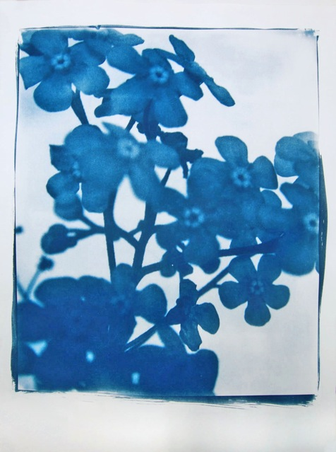 Blume, 2015, cyanotype print, hand printed on Arches Platine paper, edition of 10, 112 x 45 cm