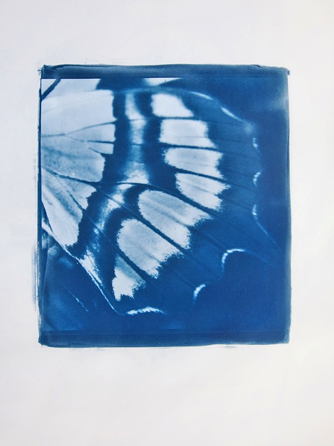 Schmetterling, 2015, cyanotype print, hand printed on Arches Platine paper, edition of 25, 75 x 56 cm